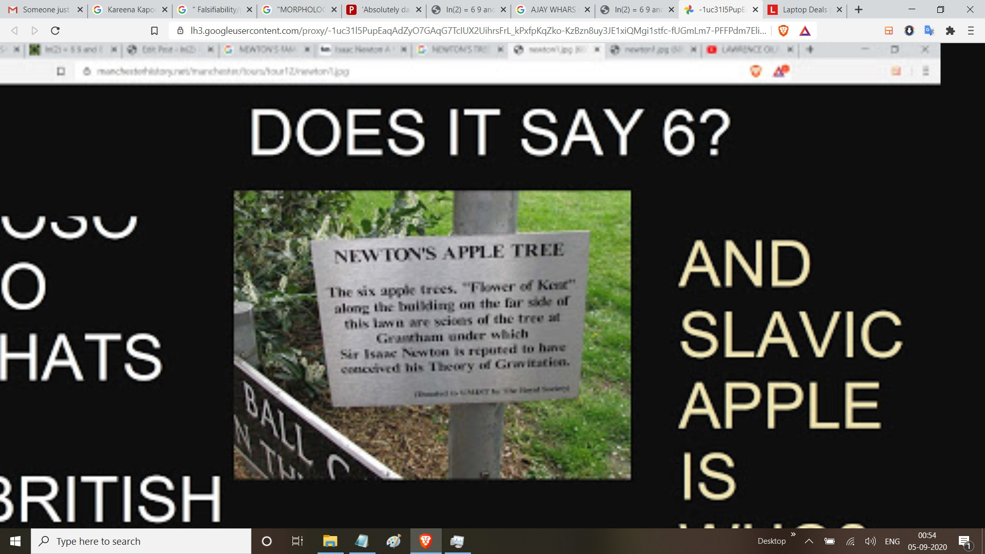 NEWTON;SAPPLE TREE 6