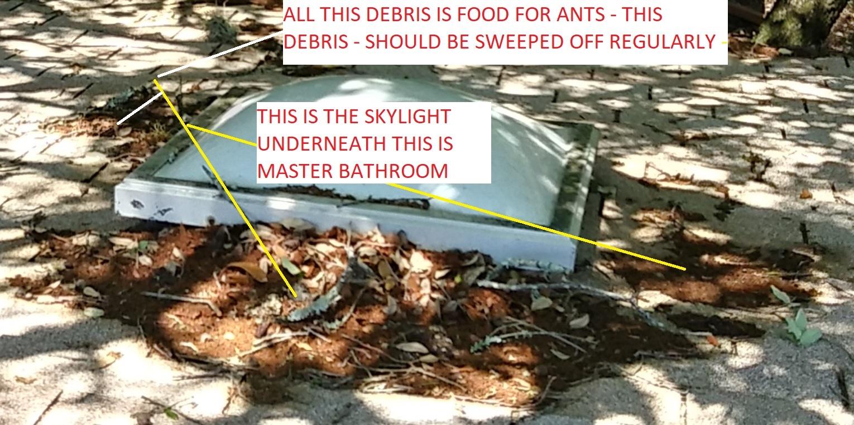 source-bugs-ants-slylight-now-fixed